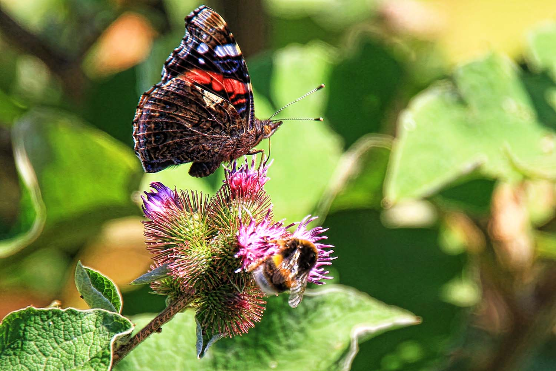 Una Mariposa en el Gorbea