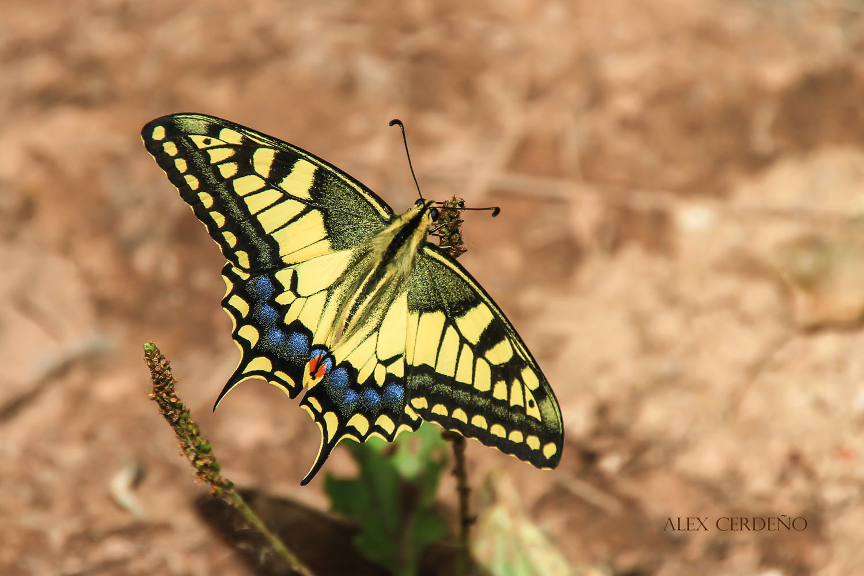 Foto de una mariposa en Uruñuela