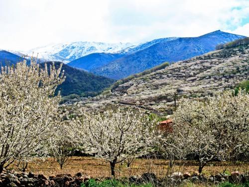 Vista del valle del Jerte lleno de millones de cerezos en flor