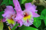 Orquideas de Loro park Tenerife