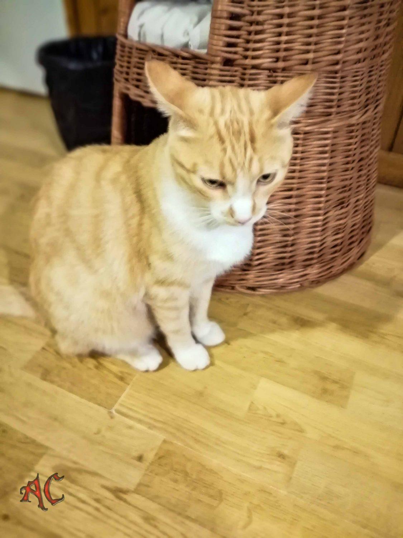 Simba el gato del albergue Vieira